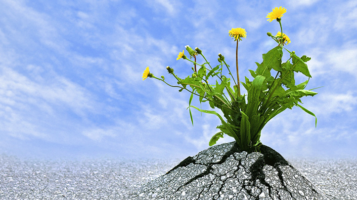 resilience-and-the-gift-of-failure-722x406-1