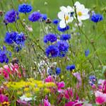 wild-flowers-in-meadow